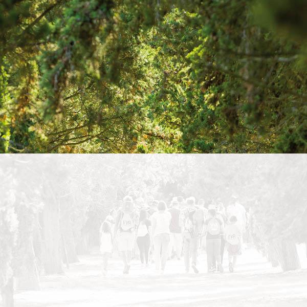 Saumur en Vienne